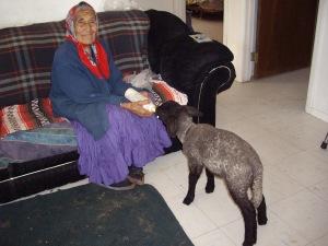 Della GrayMountain feeding her lamb.