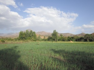 Small Irrigated Onion Field Along a River near Lalibela, Ethiopia
