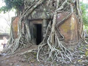 Fig Tree Strangling Tower at a Koh Ker Temple