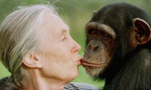 Jane Goodall in Gombe Stream National Park