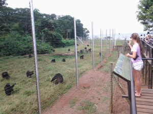 Feeding Time at the Ngamba Sanctuary