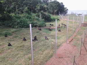 Fencing System Separating the Chimp Habitat from the Island Infrastructure