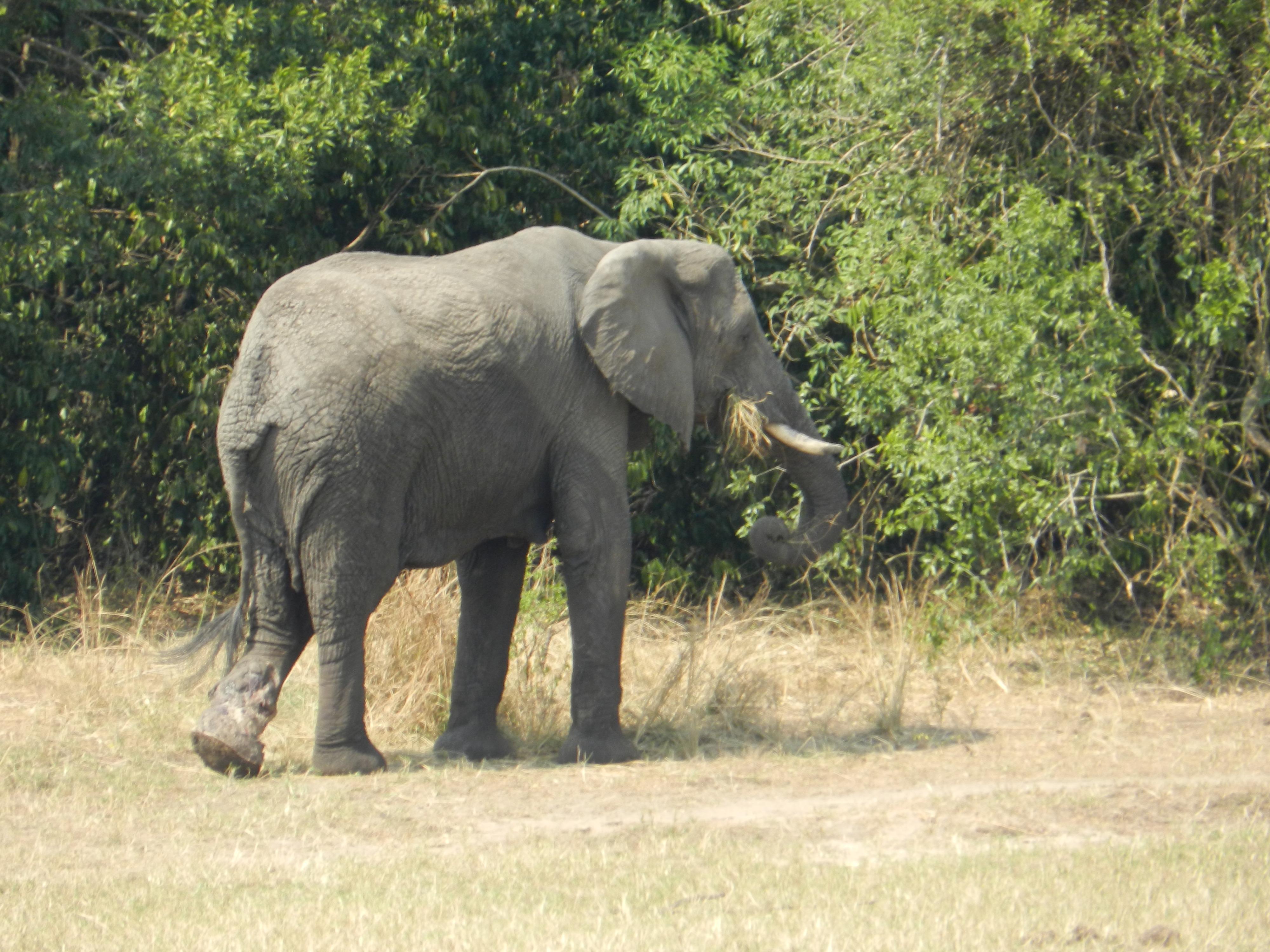 Animals Of Murchison Falls National Park Uganda Tired
