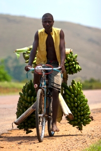 Ugandan Transporting Plantains to Market