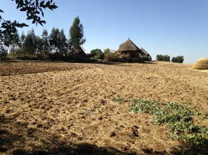 Subsistence Farm on the Ethiopian Highlands