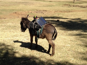 Our Support Donkey Equipped with Solar Panel and Battery-powered Lantern