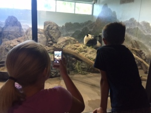 My Grandchildren at the Washington DC Zoo