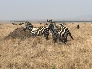 Zebras on the Serengeti Plain